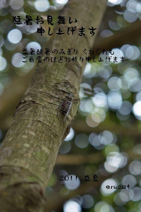 ERU_5632-3.jpg